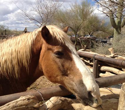 Horse_375